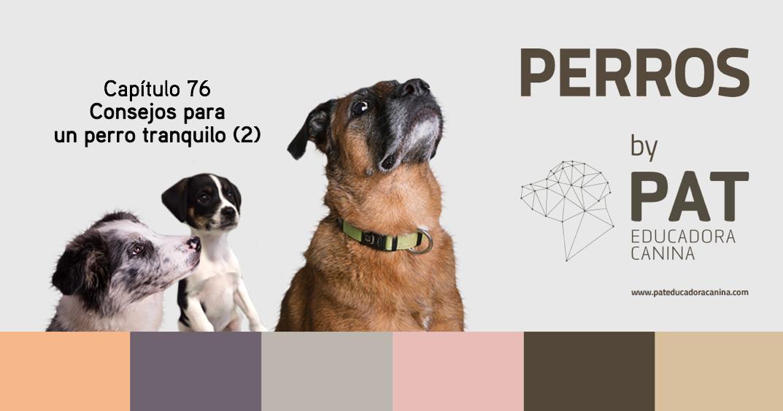 [PODCASTperros] Capítulo 76: Consejos para un perro tranquilo (2)
