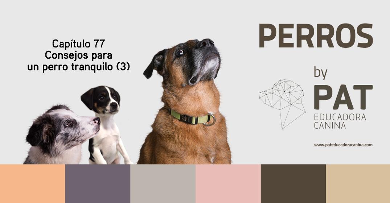 [PODCASTperros] Capítulo 77: Consejos para un perro tranquilo (3)