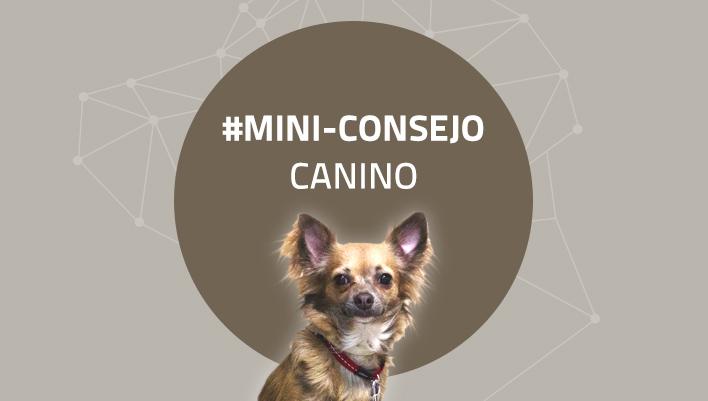 Mini-consejo canino 70: Aprende a saludar a un perro