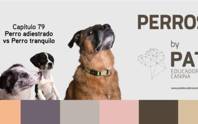 Capítulo 79. Perro adiestrado vs perro tranquilo