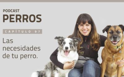 Capítulo 97. Las necesidades de tu perro