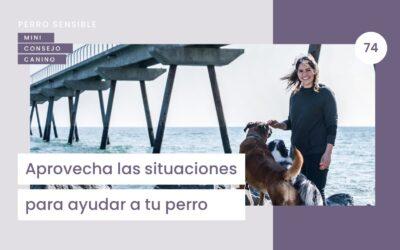 Capítulo 74. Aprovecha las situaciones para ayudar a tu perro