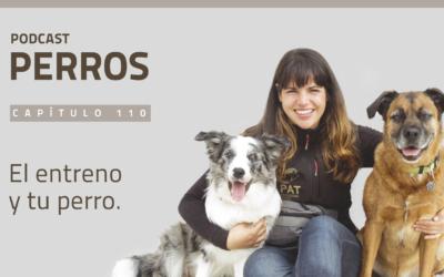 Capítulo 110. El entreno y tu perro