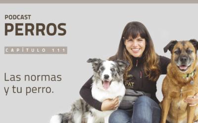 Capítulo 111. Las Normas y tu perro