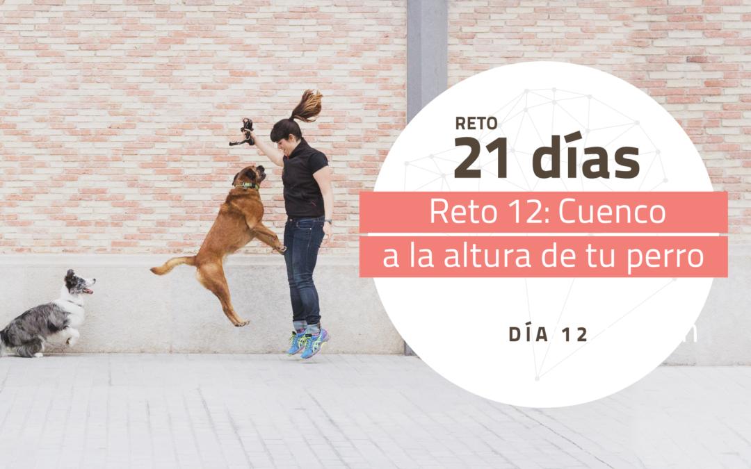 [Reto 12 – Cuenco a la altura de tu perro] Reto 21 días para darle la vuelta al mundo de tu perro