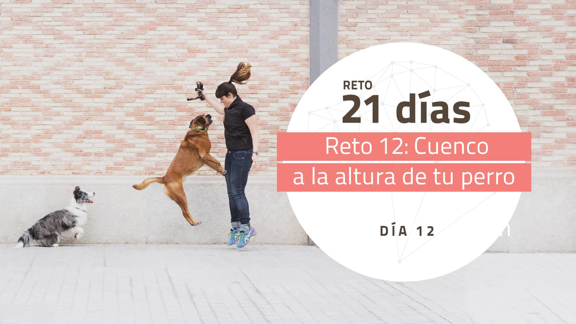 Reto 12 – El cuenco a la altura de tu perro