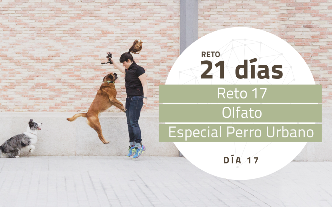 [Reto 16 – Olfato] Reto 21 días para darle la vuelta al mundo de tu perro