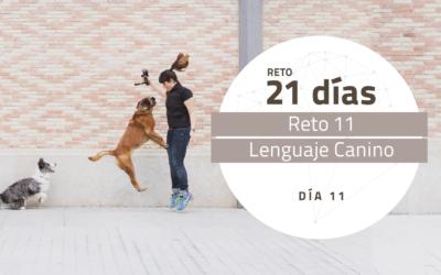 [Reto 11 – Lenguaje Canino] Reto 21 días para darle la vuelta al mundo de tu perro