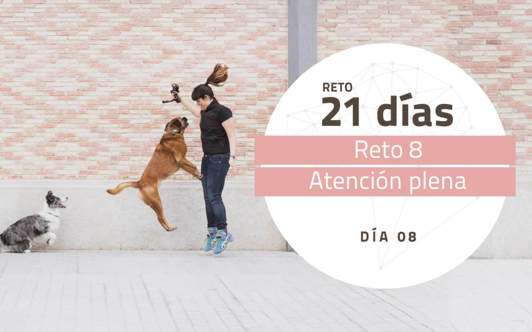 [Reto 8 – Atención plena] Reto 21 días para darle la vuelta al mundo de tu perro