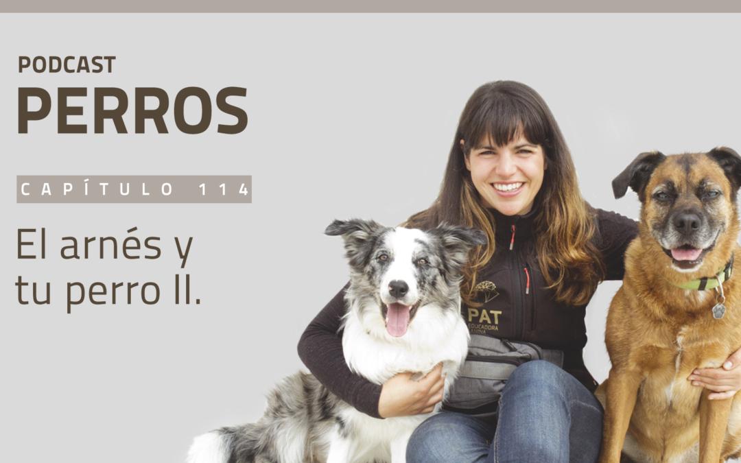 Capítulo 114. El arnés y tu perro II