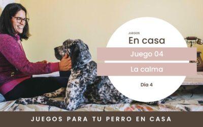 Día 4. La calma de tu perro