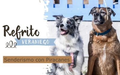 [REFRITO Veraniego] SENDERISMO con PIRACANES