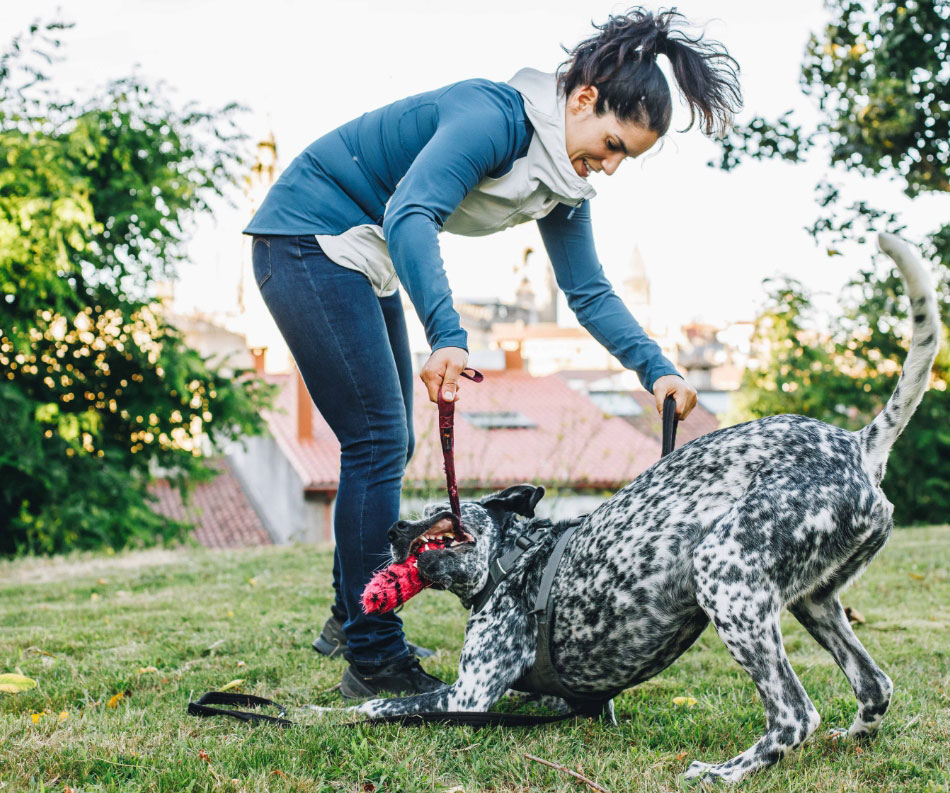 Juega con tu perro