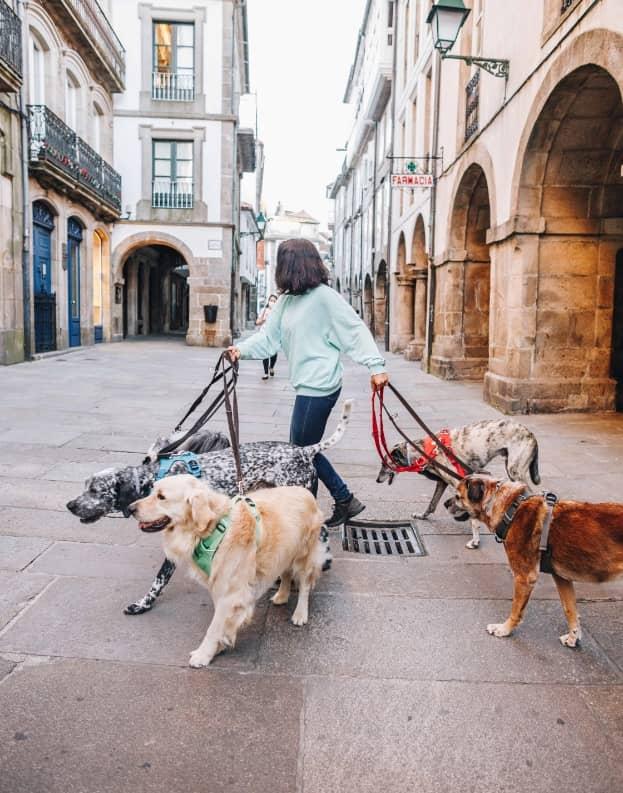 Perro Urbano
