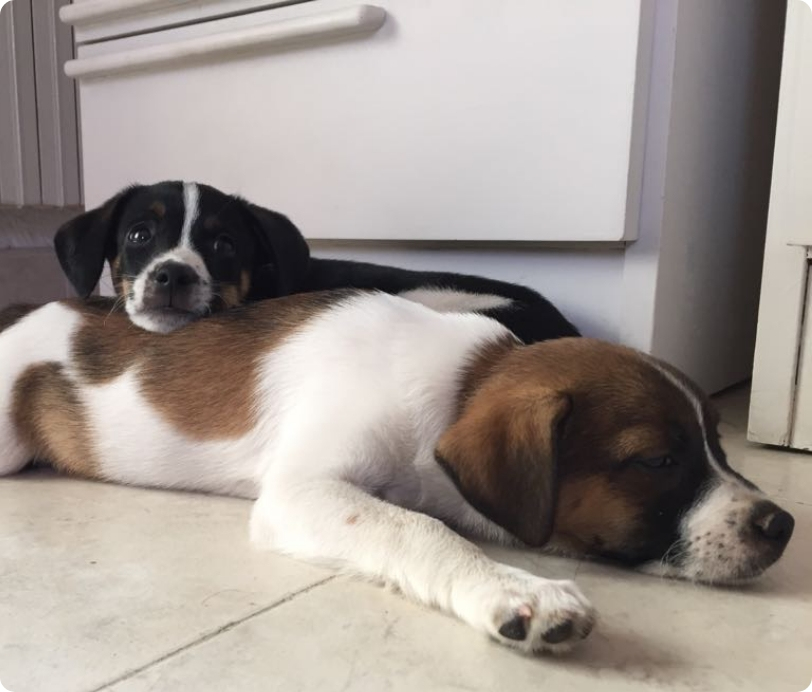 El cachorro en casa
