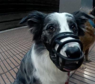 bozal-para-perro