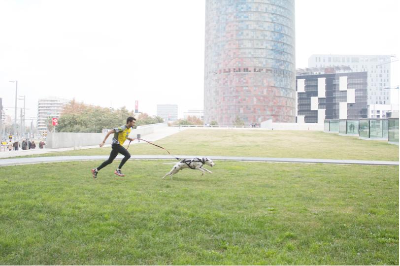 correr-perro-canicross