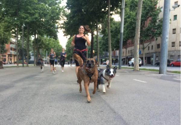 correr-perro-ciudad
