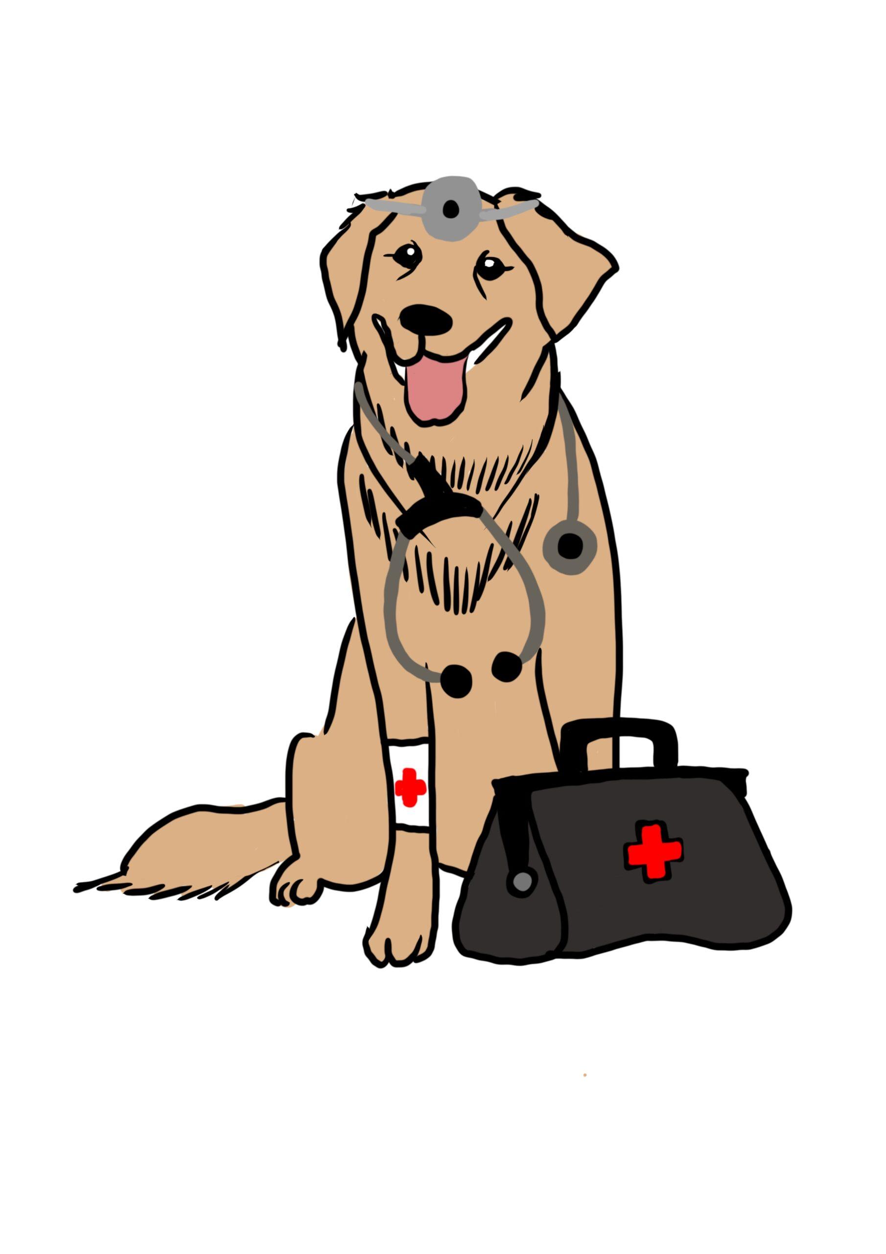 Curso Perro Tranquilo - PAT Educadora Canina