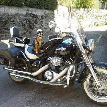 perra-casco-moto