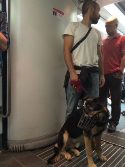 perro-dentro-metro
