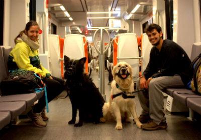 perros-en-el-metro