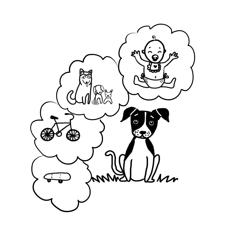 Curso Perro Joven - PAT Educadora Canina
