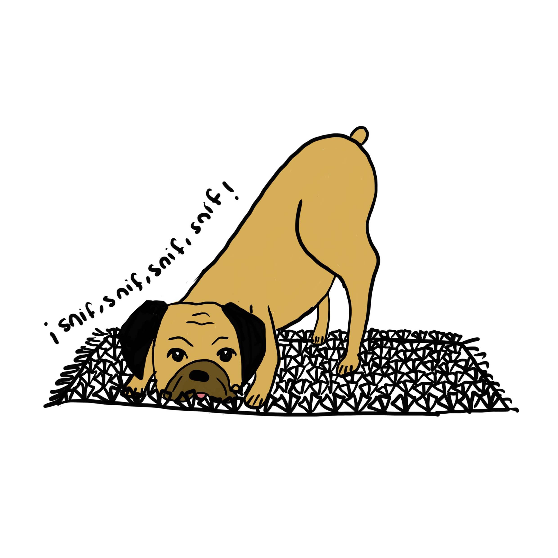 Curso Perro Senior - PAT Educadora Canina