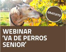 webinar gratuito perros senior