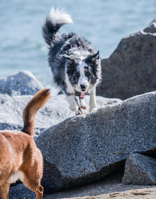 Viajar con perro