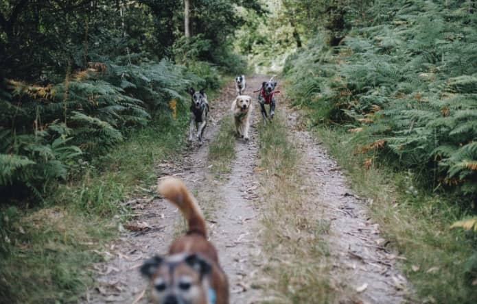 Los Perros paseando por el bosque