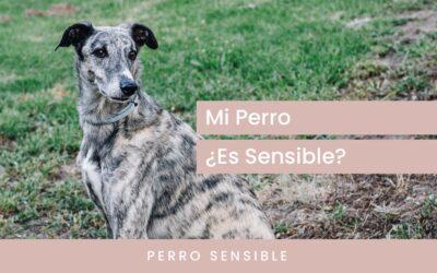 ¿Mi perro es sensible?