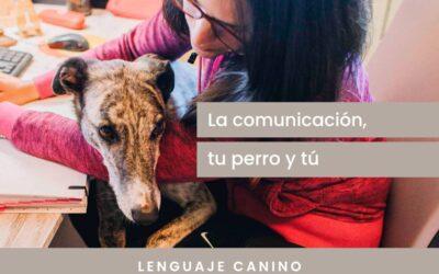 La comunicación, tu perro y tú